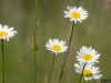 DSC_8890_kwiaty