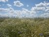 DSC_8800_kwiaty
