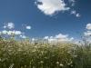 DSC_8804_kwiaty