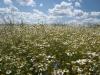 DSC_8805_kwiaty