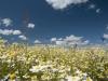 DSC_8806_kwiaty