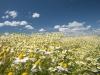 DSC_8807_kwiaty
