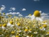 DSC_8808_kwiaty