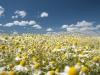 DSC_8810_kwiaty