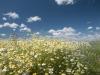 DSC_8814_kwiaty