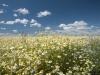 DSC_8815_kwiaty