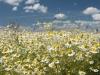 DSC_8816_kwiaty