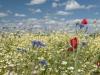 DSC_8817_kwiaty
