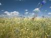 DSC_8818_kwiaty