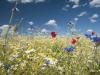 DSC_8820_kwiaty