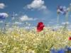 DSC_8821_kwiaty