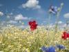 DSC_8822_kwiaty
