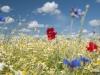 DSC_8823_kwiaty