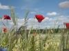 DSC_8825_kwiaty