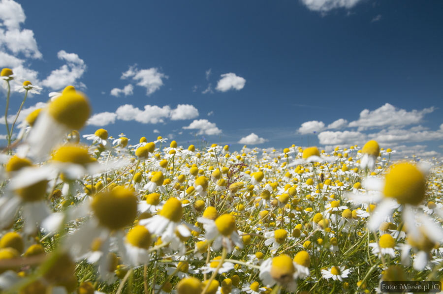 DSC_8809_kwiaty